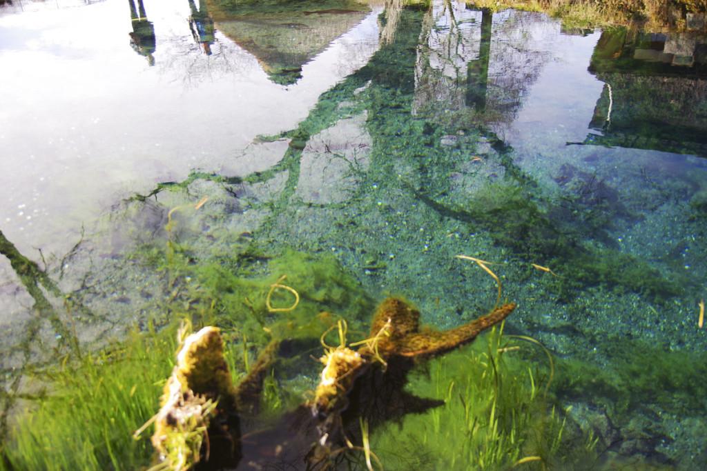 忍野八海のひとつ涌池の澄んだ水