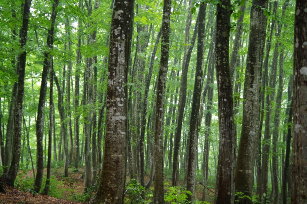 美人林の美しい木々