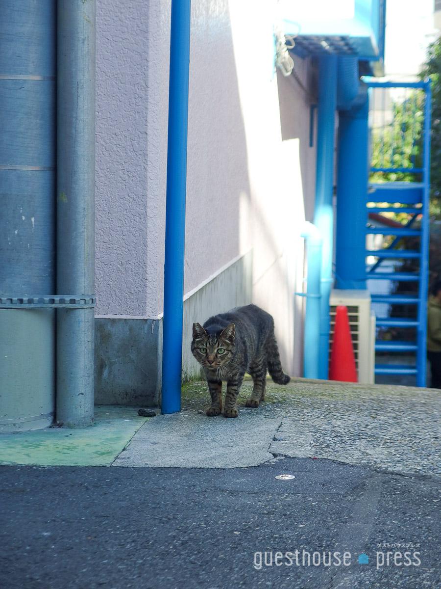 坂が多いまちは猫が多いまち?散歩中何度か猫の姿が。