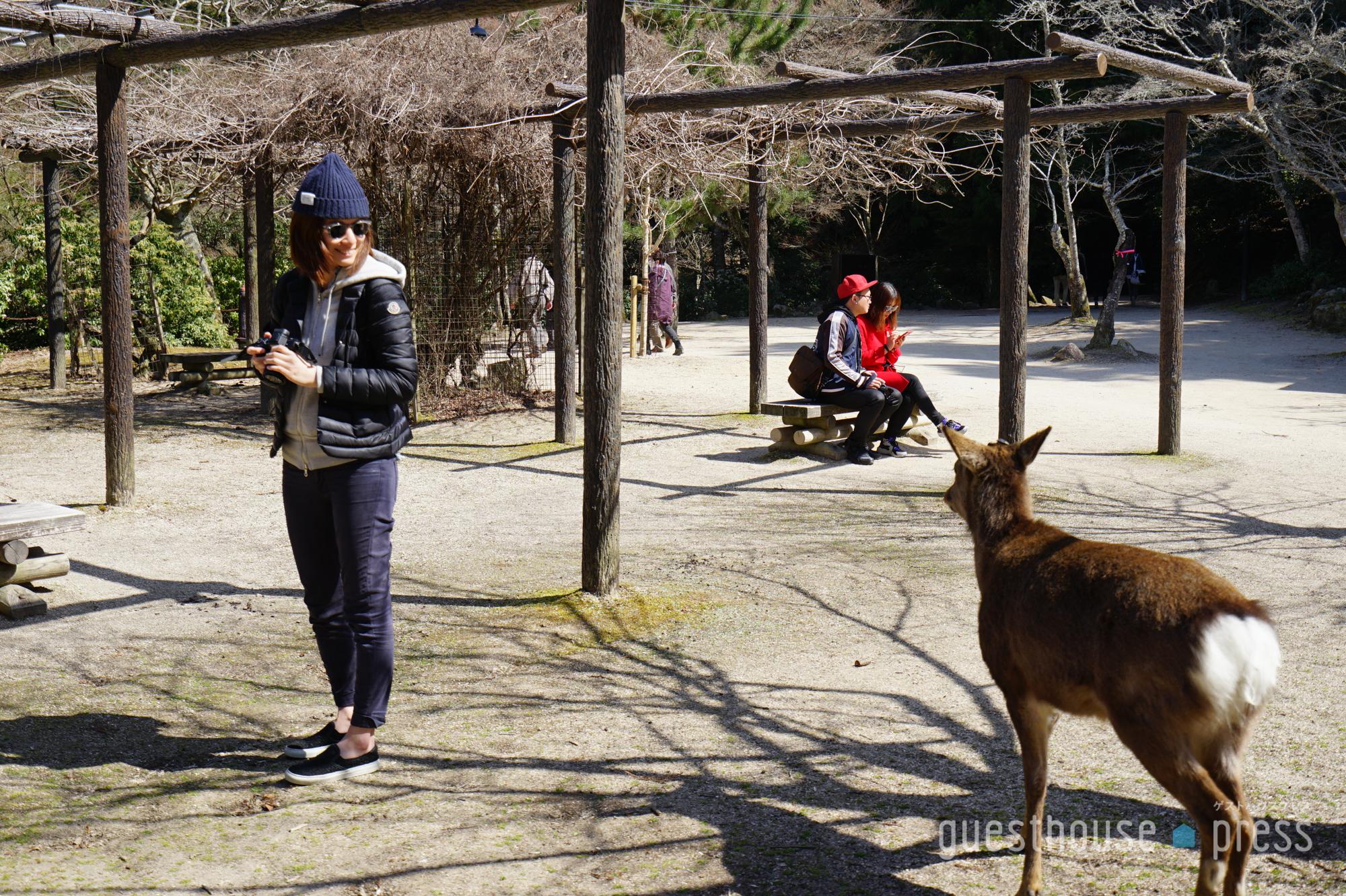 広島・宮島の鹿と目が合うキャス