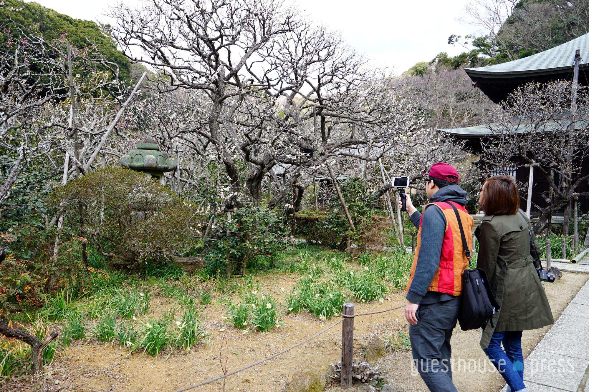 梅が美しいお寺に来ました